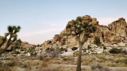 Joshua Tree - Film Location (Mr. Location Scout)