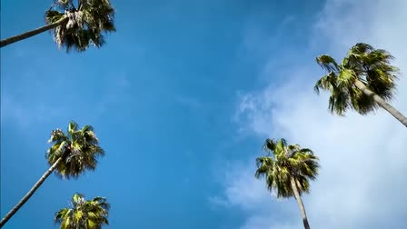 Hollywood Palms - Film Location (Mr. Location Scout)
