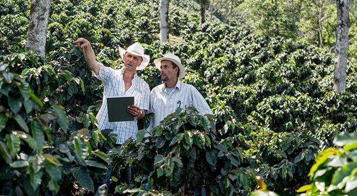 Impulse su pyme de producción agrícola dentro del sector cafetero
