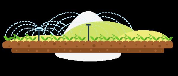 Cultivo de alimentos orgánicos en Colombia
