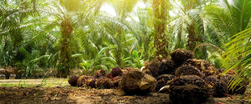 Así es como las pymes participan en la producción de aceites en Colombia