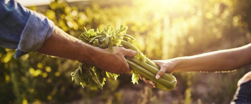 Desafíos de una pyme agro en la época de la agricultura sostenible