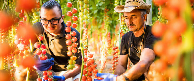 Apueste por los agronegocios en Colombia, un sector que crece
