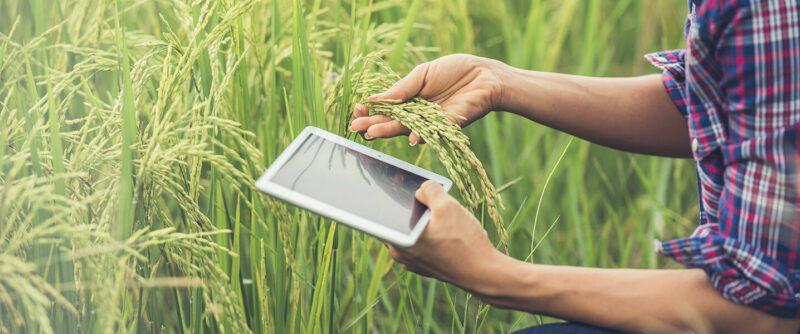 Agrotech: la tecnología aplicada al agro que le puede brindar oportunidades a su negocio