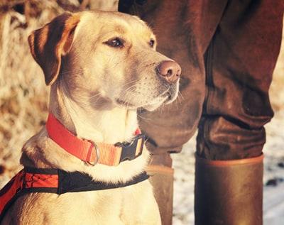 Pets Image