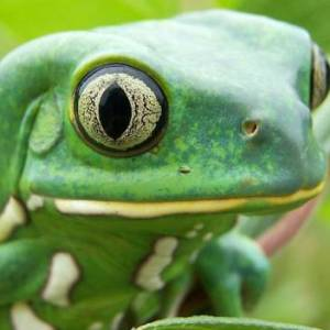Career In Zoology: Know The Eligibility, Jobs, And Salary