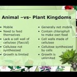 animal vs plant kingdom
