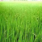 फसलों की बुवाई के महत्वपूर्ण आंकडे