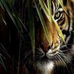 100 वर्षों में पहली बार बाघों की संख्या में 22% वृद्धि दर्ज