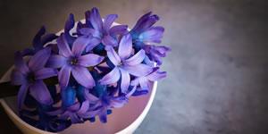 Para quem você daria estas lindas flores lilás?