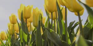 Sua foto preferida entre lindas flores amarelas!
