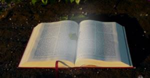 Qual sua mensagem bíblica de hoje?