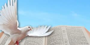 De qual versículo bíblico seu coração esta precisando hoje?
