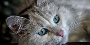 O que seu gato pensa de você?