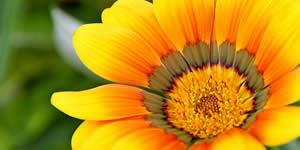 Mosaico de florzinhas com 33 amigos! Crie o seu!