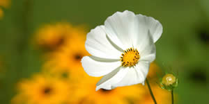 Mosaico con bella flor y 16 amigos. Crea el tuyo!