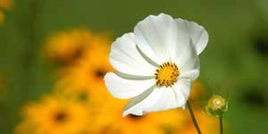 Mosaïque avec belle fleur et 16 amis. Obtenez le vôtre!
