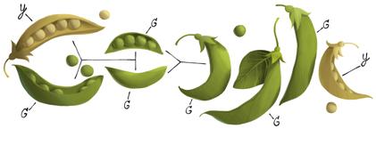 Google Pea Logo - Gregor Mendel