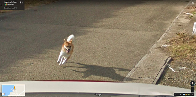 Dog Chasing A Google Street View Car