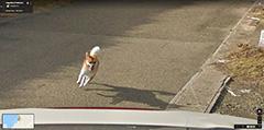 Dog Chasing A Google Street View Car