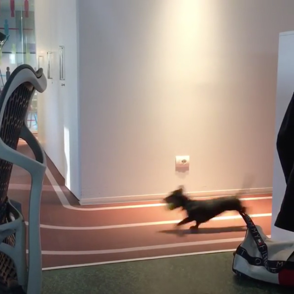 Dog Racing At Google