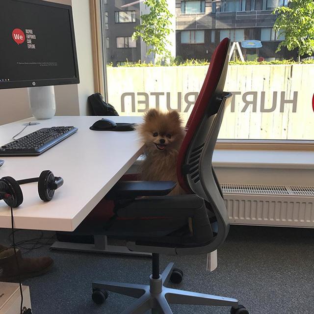 Dog Working At Google Desk