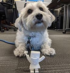 Doogler Molly With GoogleBot