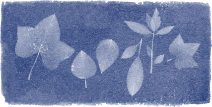 Google Logo For 216th Birthday Of Anna Atkins, The Botanist