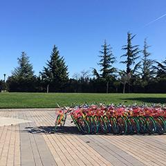 Calming Google Bikes