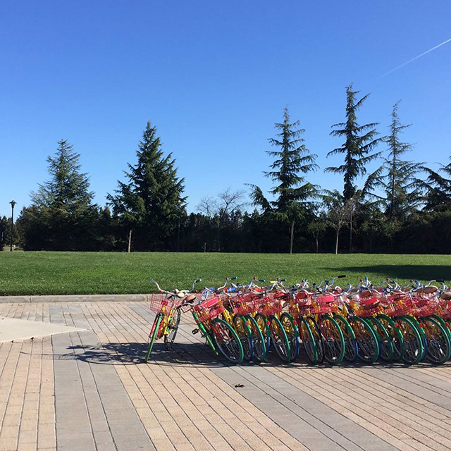 Calming Photo Of Google Bikes