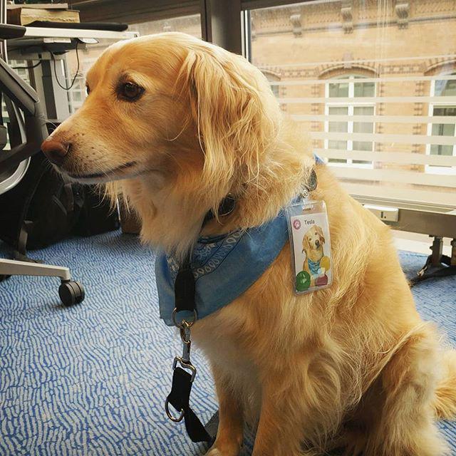 Dog With Google Badge