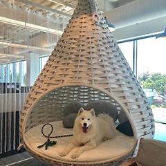 Google Hanging Dog Bed