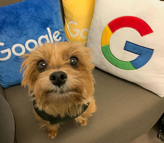 Google Dog With Puppy Eyes