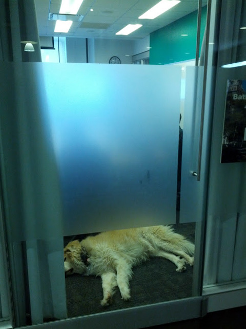 Google Dog Sleeping