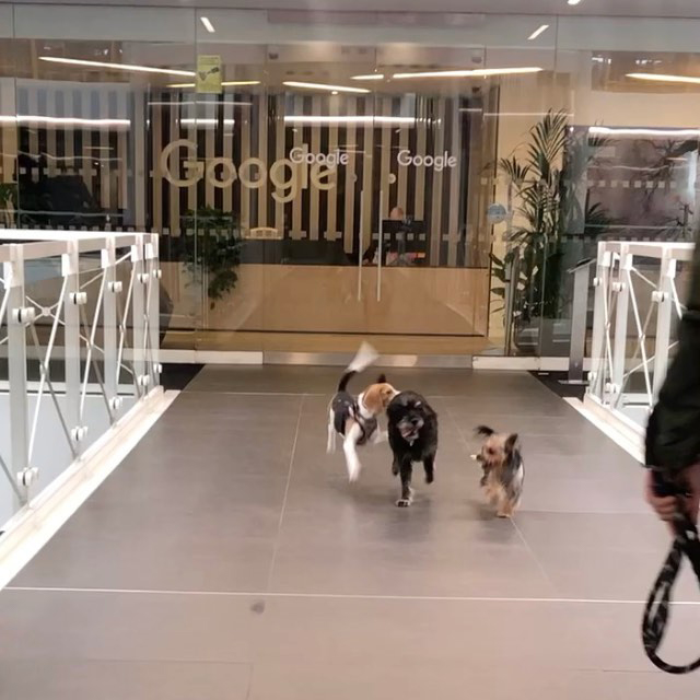 Dogs Leaving Google Office