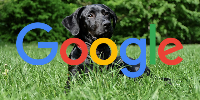 Google Fetch