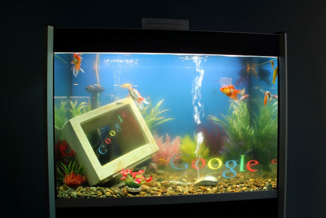 ... Fish Tank. The fish tank has Google logos, a computer, and of course