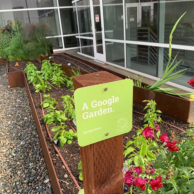 A Google Garden