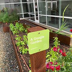 Google Garden