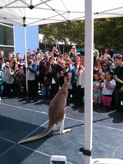 Kangaroo Visits Google