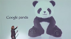 google panda launch