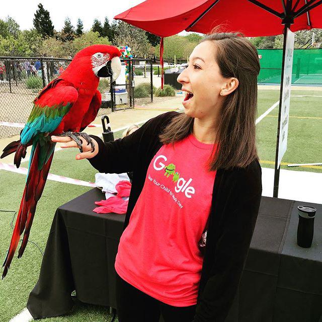 Parrots At Google