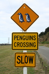 Google Penguin Slow