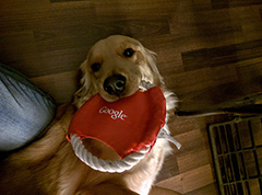 Google Dog Toy