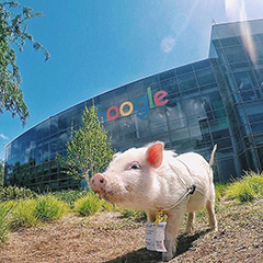 Google Pig