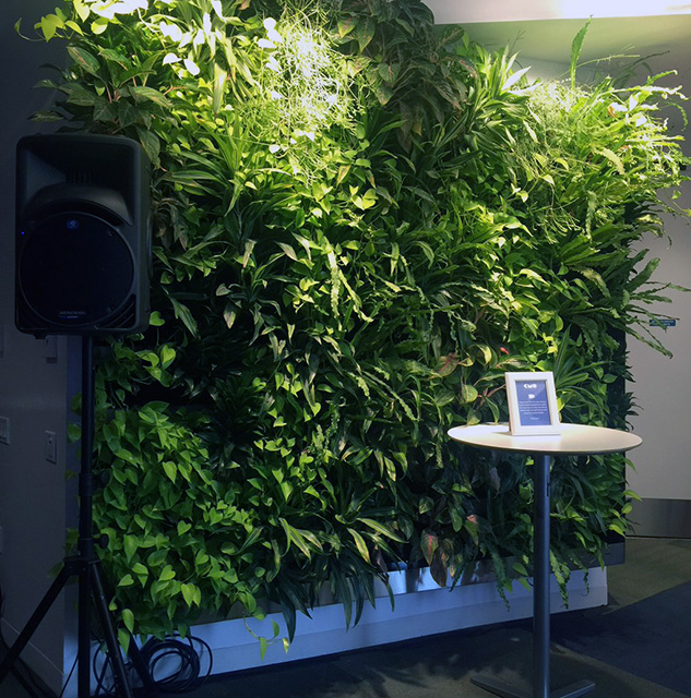 Google's Green Plant Wall For Feng Shui