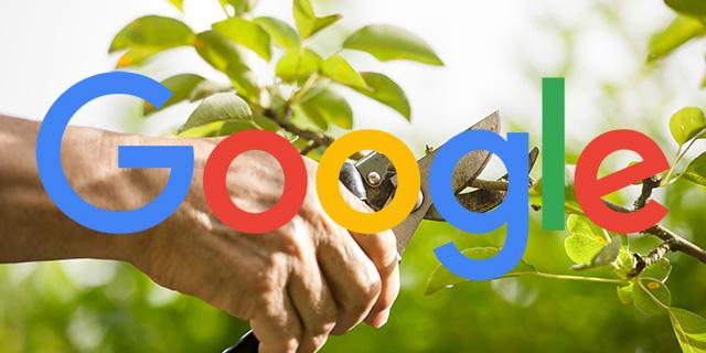 Google Pruning