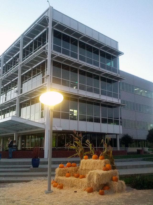 Google's Pumpkin Pile