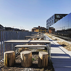 Google Zurich Outdoor Picnic Area With Tree Stump Chairs