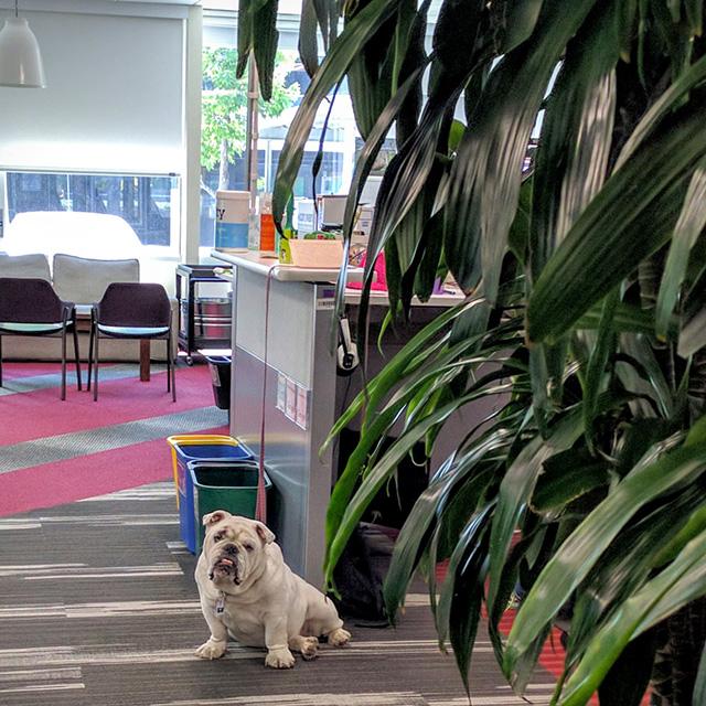 Google Dog Working